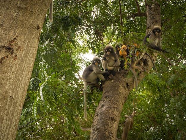Mono de hoja oscura en el árbol