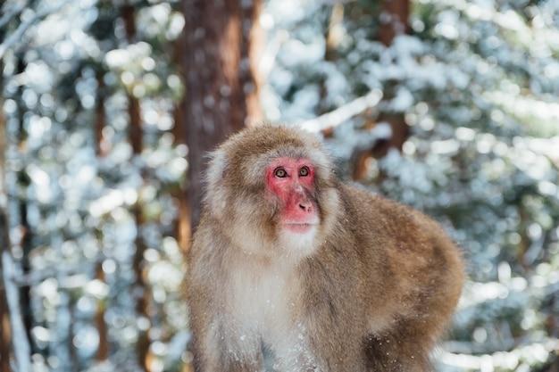 Mono de nieve en japon