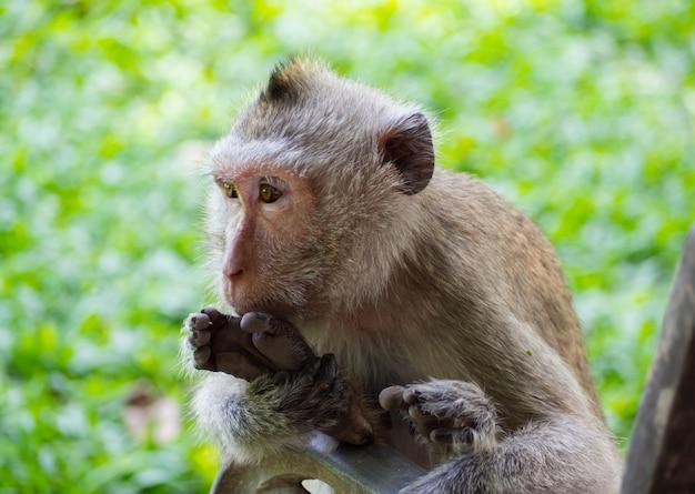 Mono sentado en la hierba. verde en el ojo de mirada traviesa.