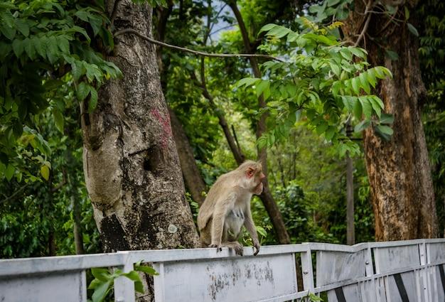 Un mono sentado en el lado de la carretera