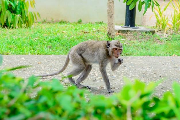 Los monos están caminando en el parque.