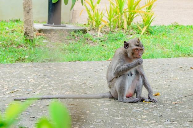 Los monos están sentados en el parque.