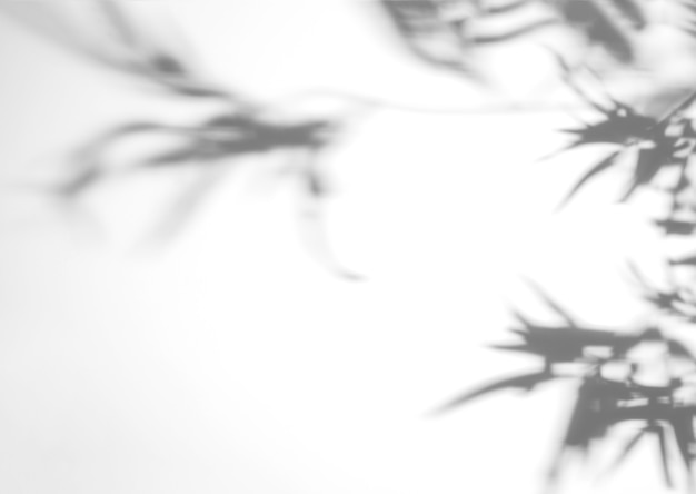 Monstera borrosa deja sombra sobre fondo blanco