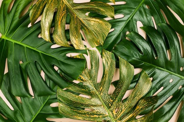 Monstera hojas pintadas de oro. concepto de verano, flatlay, fondo pastel