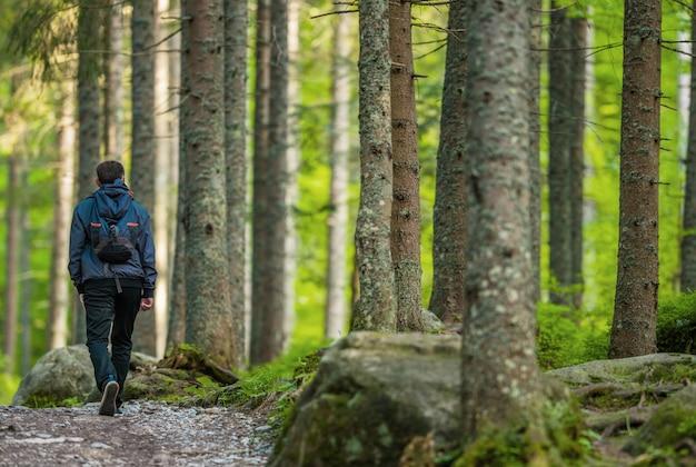 Montaña bosque senderismo