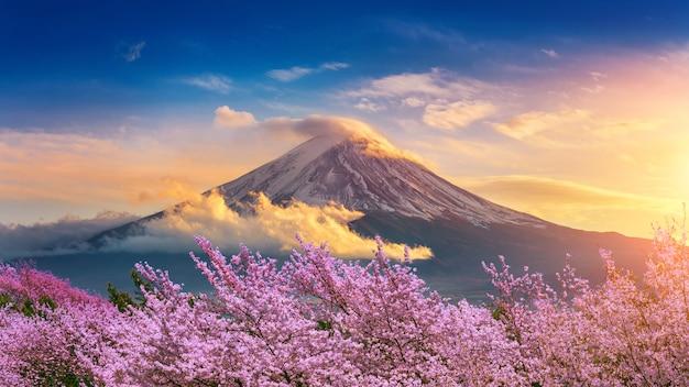 Montaña de fuji y flores de cerezo en primavera, japón.