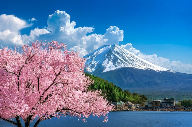 Montaña fuji y flores de cerezo en primavera, japón.