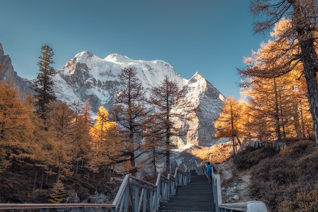 Montaña sagrada de xiannairi con bosque de pinos de otoño en yading