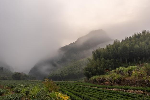 Montaña de té y bosque en niebla matutina