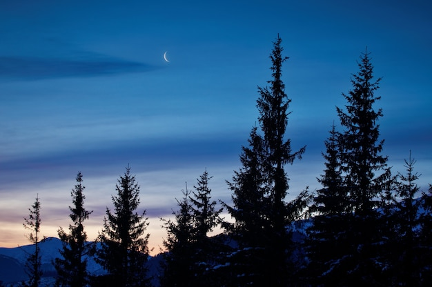 Montañas de invierno y abetos por encima de las nubes al amanecer