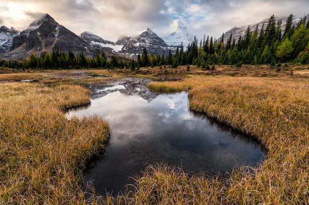 Monte assiniboine reflejo en el estanque en pradera dorada en el parque provincial