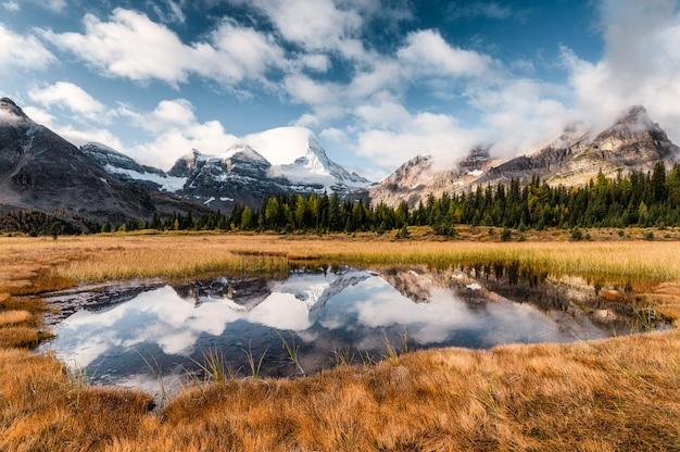 Monte assiniboine reflexión sobre estanque en pradera dorada en canadá