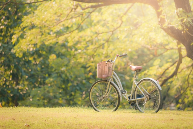 Monte en bicicleta en hierba verde en el parque en la puesta del sol.