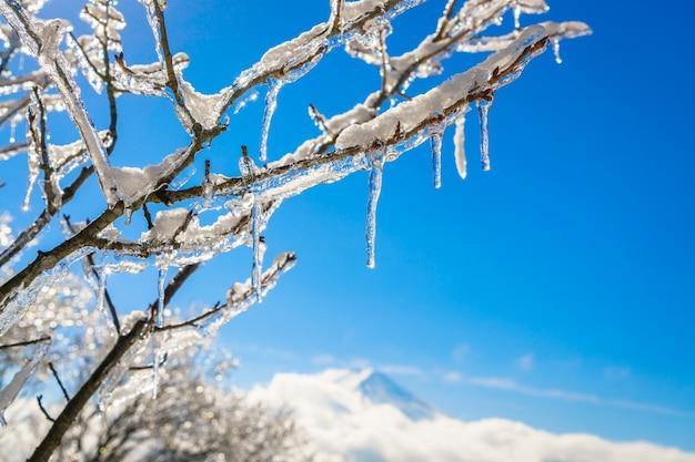 Monte fuji con la capa de hielo en los árboles