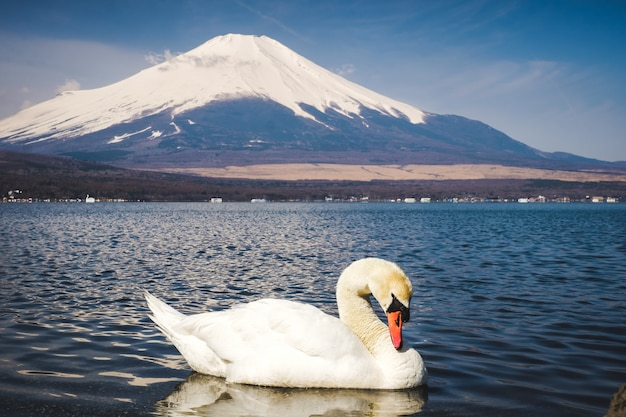 El monte fuji en japón.