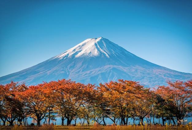 Monte fuji sobre fondo de cielo azul con follaje otoñal durante el día en fujikawaguchiko, japón.