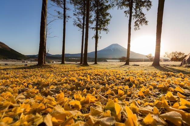 Monte fuji sunrise