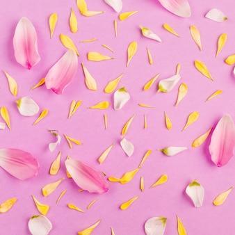 Montón de diferentes pétalos de flores dispersas