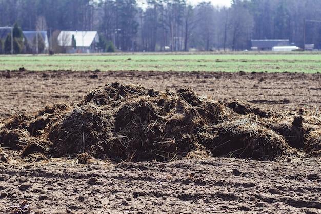 Montón de estiércol en el campo arado en la aldea en primavera, con casas