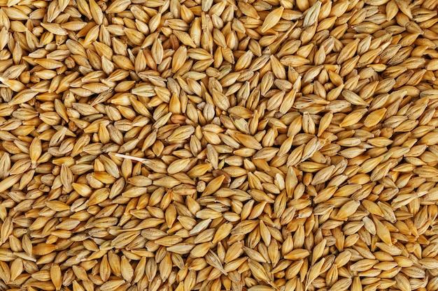 Montón de granos de cebada perlada, comida vegetariana