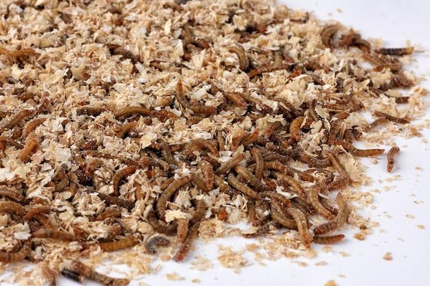 Montón de gusanos en salvado de trigo
