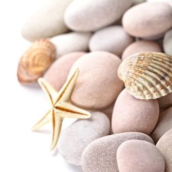 Montón de piedras, conchas y estrella de mar.
