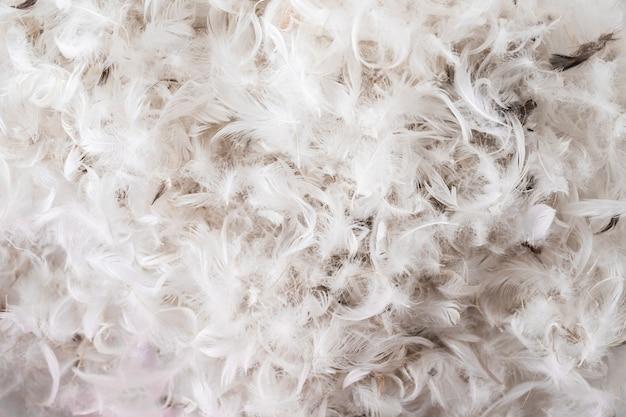 Montón de plumas de aves