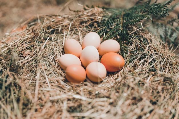 Un montón de rústicos huevos de corral en un diseño de paja.