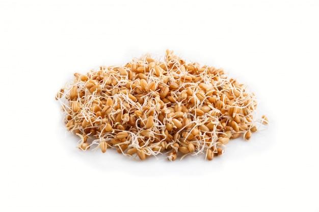 Montón de trigo germinado aislado, vista lateral.