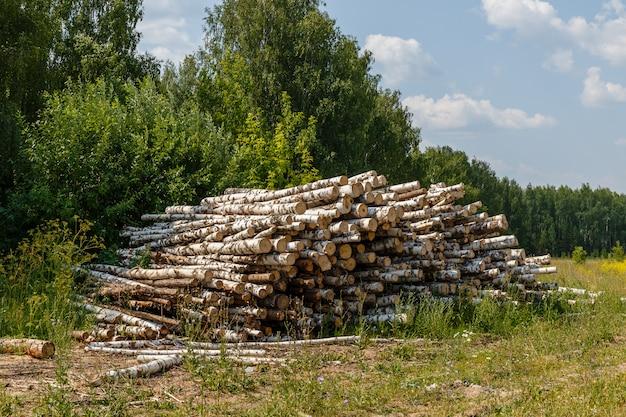 Montón de troncos apilados.