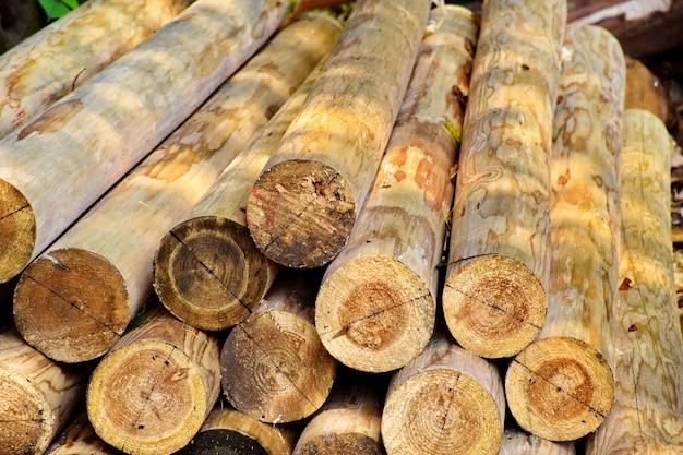 Montón de troncos