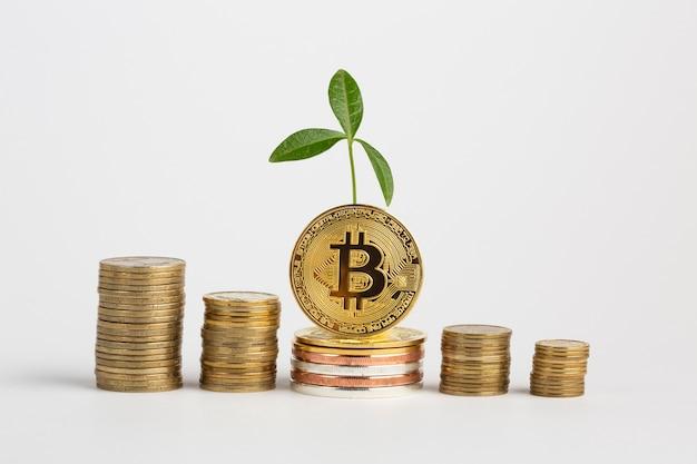 Montones de monedas con planta
