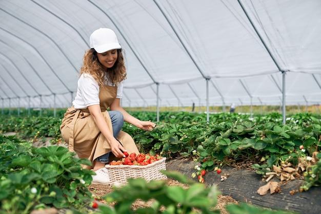 Morena está recogiendo fresas en canasta blanca