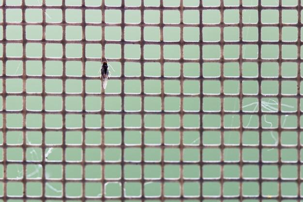 Mosquitera con primer plano de insectos. fondo