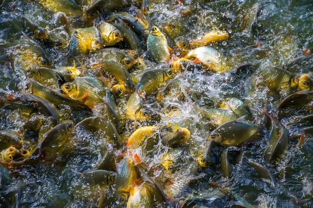 Movimiento de peces. muchos peces en el agua.