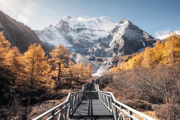 Mt.xiannairi con un bosque de pinos dorados en el pico en otoño