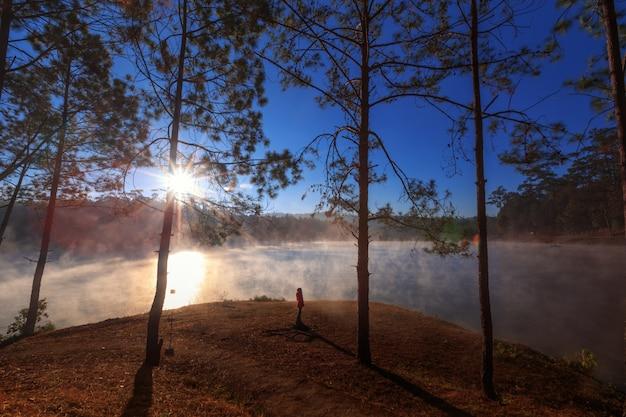 Muchacha o mujer que ve el bosque del pino de la visión en tiempo de la mañana