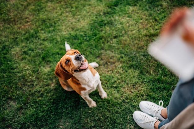 Muchacha que da un convite al perro feliz.