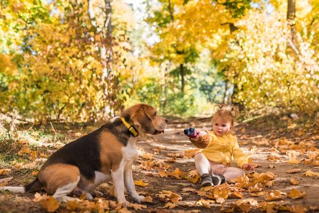 La muchacha que se sienta con su perro del beagle en otoño hojea en el bosque