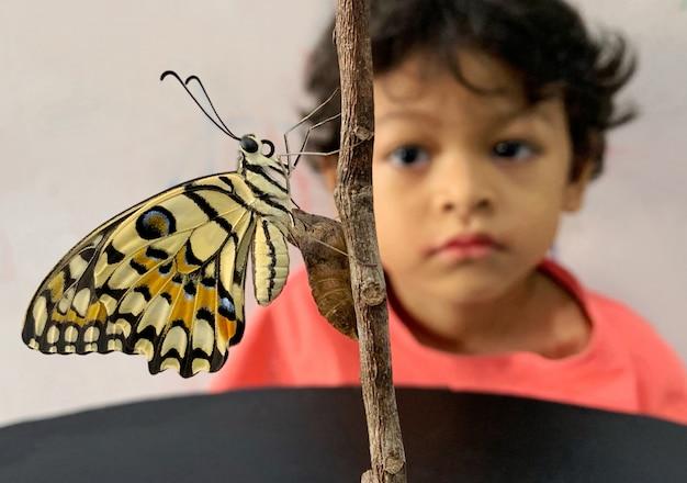 El muchacho asiático mira la mariposa que sale de la pupa.