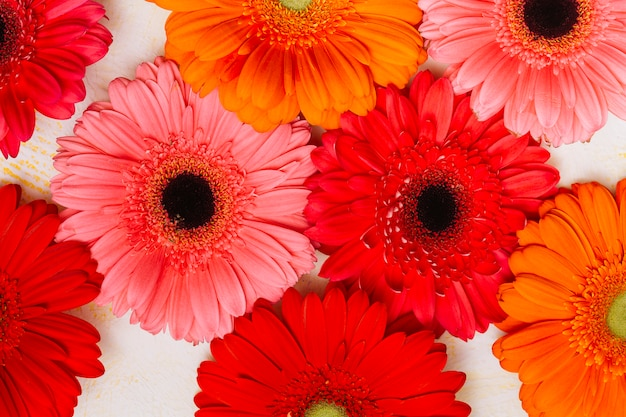 Muchas flores de gerbera en mesa blanca