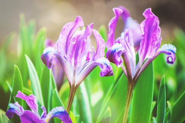 Muchas fotos de flores. collage. enfoque selectivo