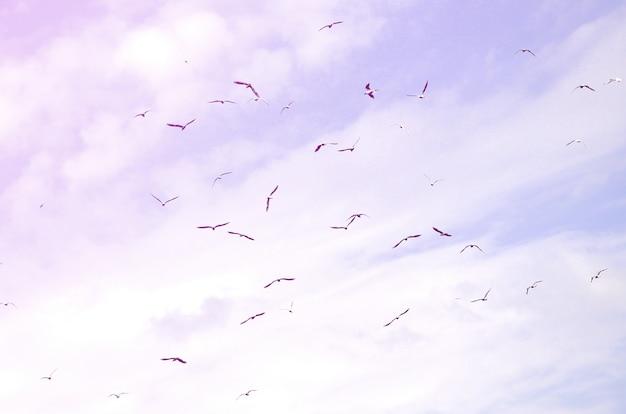 Muchas gaviotas blancas vuelan en el cielo azul nublado