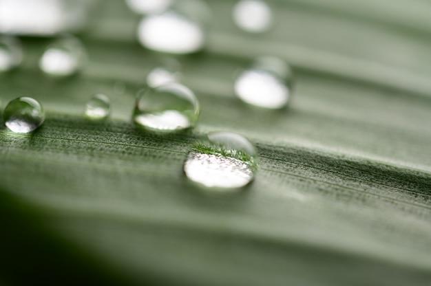 Muchas gotas de agua caen sobre hojas de plátano