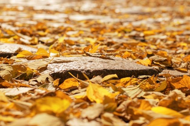 Muchas hojas de otoño en el camino.