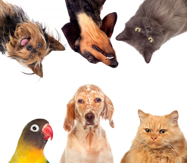 Muchas mascotas aisladas