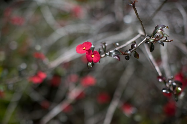 Muchas pequeñas flores rojas en las ramas de un árbol tropical