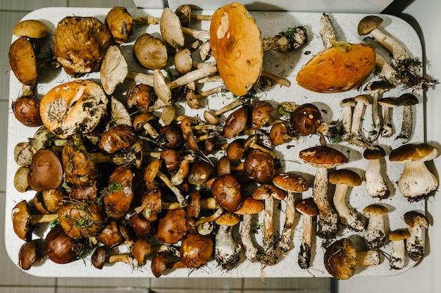 Muchos hongos comestibles blancos, musgo, sombrilla en la mesa en casa.