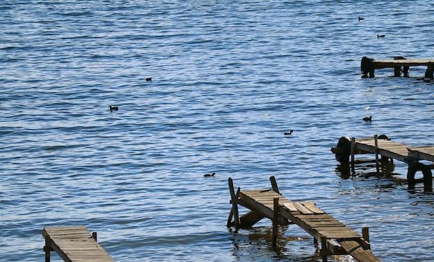 Muchos muelles de madera y aves acuáticas negras en el lago titicaca, la ciudad de copacabana, bolivia