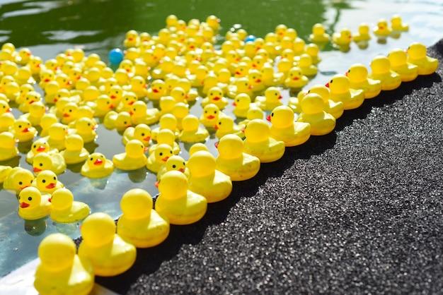 Muchos patos de goma de color amarillo brillante flotando en la piscina